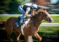 Good Magic (EASY GOER) Tags: horseracing equine thoroughbred sports belmontpark