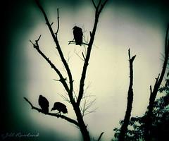 Waiting (Jill Rowland) Tags: 101panap1010930mp4 birds tree abstract nature green