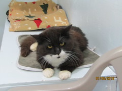 Muppet - 2 year old neutered male