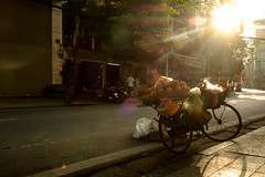 pineapples in a basket on a bicycle (BryonLippincott) Tags: frenchquarter hanoi oldtown street streetscene sunrise vietnam baskets bicycle fruit goldenhour lensflare morninglight naturallight streetphotography sunrays sunflare vnm frencholdquarter vietnamese urban city capitalcity dailylife travel sightseeing vendor basket selling forsale pineapple morning morningroutine sun sunlight shadows haze smog softlight localculture asia southeastasia vietnameseculture