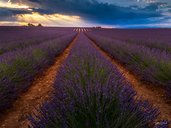 Fields of lavender (Soregral) Tags: france ciel velvet leefilter provence paysage light montagne champ coucherdesoleil violet techniquephoto sunset lumière lavender lavande field
