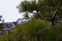 DEH_2613 (sobca) Tags: alpine california laketahoe laketahoebasinnationalforestlands nevada sierramountains emeraldbay