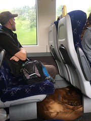 ...moved in with the guy behind (What I saw...) Tags: scotrail train perth inverness dog