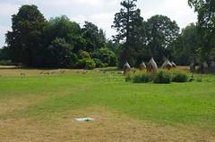 JLF17862 (jlfaurie) Tags: jardin garden bagatelle paris france francia parc parque 22072018 mpmdf jlfr jlfaurie mechas roseraie fleurs roses rosas