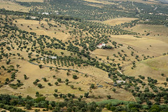 Red Dot (Darren Poun) Tags: fez morocco africa arab arabic moroccan traveling medina nikon d800 d800e nikkor105mm f14 landscape nature ngc