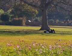 Late afternoon (Mariasme) Tags: lateafternoon botanicalgardens sydney challengeyouwinner