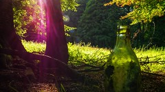 Into the wood (Reaika) Tags: forest hometown grass wood bottle