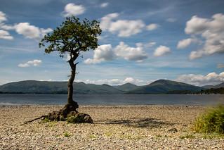 Lone Tree on Loch Lomond