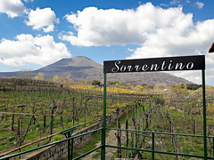 Naples, Italy (vincocamm) Tags: volcano naples italy vineyard winery wine spring vines clouds cloudy