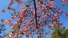 Strasbourg 138 (molaire2) Tags: strasbourg estrasburgo printemps primavera spring 2018 fleur cigogne orangerie arbre