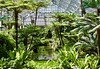 The Fern Room (elaminmachine) Tags: ferns plants garfield conservatory nature green water greenhouse