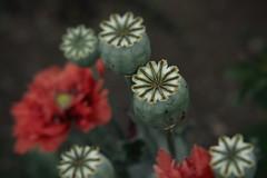 Hovander 0084 (Phil Rose) Tags: leaf flowers flora hovander park fragrance garden