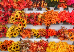 Brockville Ontario - Canada - Store front Autumn Flower Cluster - Colonial Flowers & Gift Shoppe (Onasill ~ Bill Badzo) Tags: colonial flowers gift shoppe hwy 2 kings highway st west flowershop autumn season sunflower collage onasill historical district historic heritage town city leedscounty grenvillecounty brockville square courthouse architecture light fixture old post office custom house walking tour tunnel railroad attraction mustsee hdr elizabethtown eastern ontario canada thousand island dry good broad life insurance london hats furs craig canon eos rebel sl1 18250mm sigma macro building store front cluster 1000 islands lawrence river
