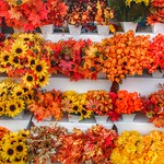 Brockville Ontario - Canada - Store front Autumn Flower Cluster - Colonial Flowers & Gift Shoppe thumbnail