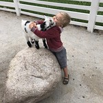 "Goat time at the zoo! <a style=""margin-left:10px; font-size:0.8em;"" href=""http://www.flickr.com/photos/124699639@N08/41415674850/"" target=""_blank"">@flickr</a>"