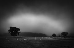 Tamar Valley, Mist and Meadow. (Lanstefan Foto) Tags: tamarvalley launceston cornwall kernow