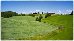 Nannestad 07.07.2018 (Krogen) Tags: norge norway norwegen akershus romerike nannestad landscape landskap krogen fujifilmx100