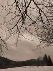 Chartreuse, 2018 (Olivier BERTRAND) Tags: chartreuse blackandwhite blackandwhitephotography digitalphotography neige forest forêt hiver isère landscape lumix25mm lumix monochrome micro43 noiretblanc nature naturallight olivierbertrand olympusem5markii olympus paysage panasoniclumix25mm winter woods snow 25mm primelens photography landscapephotography
