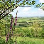 view from Pilsdon Pen Hillfort thumbnail