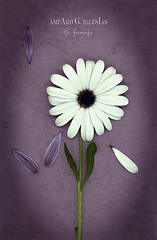Pequeños detalles - Amparo García Iglesias (Amparo Garcia Iglesias) Tags: flor margarita blanco white hojas fotos photos amparo garcia iglesias detalles petalos purple lila ilustrative ilustracion