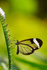 Butterfly (J.D foto) Tags: butterfly nature flower natural wings glass insect garden flying bokeh macro