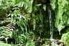 Miniature Paradise (elaminmachine) Tags: waterfall ferns plants nature green conservatory greenhouse garfield chicago