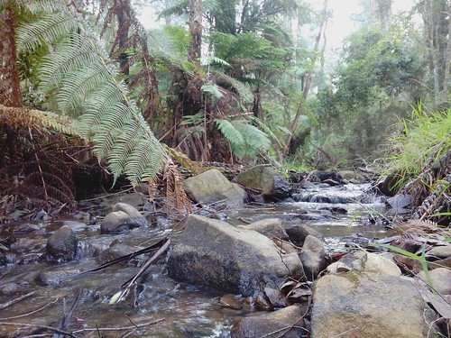 Clematis Creek by anjsimmo, on Flickr