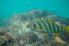 20180422-DSC_0149.jpg (d3_plus) Tags: landscape d700 nature fish marinesports apnea zoomlense 185mm izu sea port j4 skindiving 自然 nikon1 景色 風景 魚 ニコン1 watersports wpn3 drive daily マリンスポーツ japan fishingport ニコン 50mmf18 50mm dailyphoto nikonwpn3 nikon 素潜り ウォータープルーフケース 水中 nikkor sky スキンダイビング nikon1j4 漁港 underwater 海 snorkeling nikond700 地形 scenery 息こらえ潜水 ズーム 1nikkor185mmf18 eastizu 185mmf18 空 日本 東伊豆 waterproofcase シュノーケリング diving