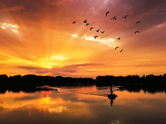 Flying birds (makardavid8) Tags: sunset warm lake landscape sky skyscape water bird birds sunrays orange goldenhour