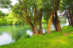 By the riverside (Rosmarie Wirz) Tags: river serio bergamo landscape trees tranquility
