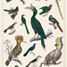 The History of the Earth and Animated Nature by Oliver Goldsmith (1774), a rare antique handcolored ornithology print of various type of birds. Digitally enhanced from our own original plate.