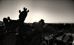 Before Sunset (4) (Polis Poliviou) Tags: nicosia lefkosia street summer capital life live polispoliviou polis poliviou πολυσ πολυβιου cyprus cyprustheallyearroundisland cyprusinyourheart yearroundisland zypern republicofcyprus κύπροσ cipro кипър chypre chipir chipre кіпр kipras ciprus cypr кипар cypern kypr ©polispoliviou2018 streetphotos europe building streetphotography urbanphotography urban heritage people mediterranean roads afternoon architecture buildings 2018 city town travel naturephotography naturephotos urbanphotos neighborhood