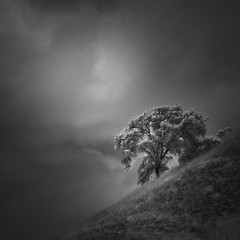 tree (nlwirth) Tags: nlwirth yup tree hill clouds light infrared grass ir