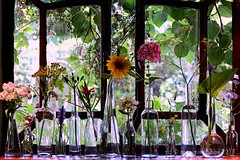 KITCHEN WINDOWSILL WITH FLOWERS FROM THE GARDEN || KEUKENRAAMPJE MET FLESJES (Anne-Miek Bibbe) Tags: keukenraam kitchen windowsill flowers bloei bloemen flor flores bloom blumen fleur fleurs fiori fioritura canoneos700d canoneosrebelt5idslr annemiekbibbe bibbe nederland 2018 raam vensterbank flesjes bottles