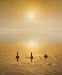 Swimming in Harmony (adrians_art) Tags: muteswans birds water rivers sunrise dawn mist fog silhouettes reflections sky