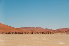 IMG_8543-4 (Tatjana_Schmid) Tags: namibia sossusvlei deadvlei wüste desert sand sanddunes dünen africa afrika landschaft landscape reise holiday urlaub travel