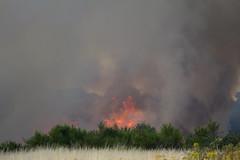 Destruction on Wanstead Flats (ArtGordon1) Tags: wansteadflats wanstead london england uk summer july 2018 fire danger davegordon davidgordon daveartgordon daveagordon artgordon1