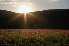 Castelluccio di Norcia, Italy. In this period of the year this place becomes special because of the lentils, which bloom making the fields a melting pot of colors. After the earthquake in 2016 Castelluccio di Norcia became something similar to a ghost tow (alesalcio87) Tags: landscape field poppyfield sunset