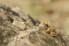 Grunas Waterfall frog 2 (Journey of A Thousand Miles) Tags: canon7d canon 2018 balkan europe albania theth thethi thethnationalpark parkukombëtarithethit prokletije accursedmountains albanianalps