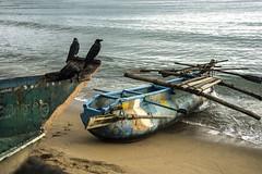 Barcas en Sri Lanka (Inmacor) Tags: barca pesca srilanka playa beach orilla cuevos birds pajaros sand scene inmacor boat boats sea mar dos two