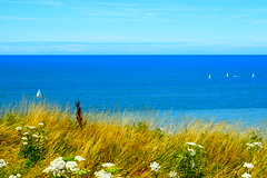 Petits Bateaux (Mélanie.B.) Tags: bleu bateaux fleur france normandie dieppe nikon d3300 tourisme