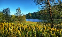 Colours of summer, Norway (Vest der ute) Tags: xt20 norway rogaland haugesund water waterscape landscape lake summer sky bluesky trees tree flowers fav25 fav200