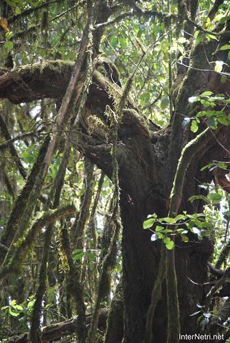 Національний парк Гарахонай, Гомера, Канарські острови  InterNetri  0716