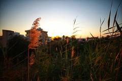 Before Sunset (25) (Polis Poliviou) Tags: nicosia lefkosia street summer capital life live polispoliviou polis poliviou πολυσ πολυβιου cyprus cyprustheallyearroundisland cyprusinyourheart yearroundisland zypern republicofcyprus κύπροσ cipro кипър chypre chipir chipre кіпр kipras ciprus cypr кипар cypern kypr ©polispoliviou2018 streetphotos europe building streetphotography urbanphotography urban heritage people mediterranean roads afternoon architecture buildings 2018 city town travel naturephotography naturephotos urbanphotos neighborhood