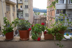 Kentsel dönüşüm (listera_ovata) Tags: rokkor rokkor28mmf25 minolta sonya7ii city cityscape flower old abandoned pot şehir kent kentseldönüşüm