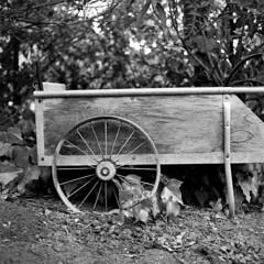 Cart (Tpstearns) Tags: hasselblad 80mmf28 film trix kodak blackandwhite bw monochrome square 120 6x6 mediumformat 500cm