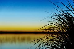 silhuethe of a grass at a shore of a lake 2 (VisitLakeland) Tags: finland lakeland summer järvi kesä lake luonto maisema nature outdoor silhuet siluetti sunrise vastavalo water