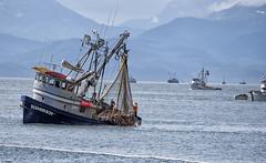 Kimber Catch 763 (Gillfoto) Tags: seine seineboat commercialfishing alaskacommercialfishing alaska juneau salmon