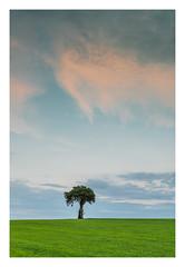 the lone tree (markmcneill22) Tags: nikon naturephotography lancashire landscapephotography nikond810 lone tree