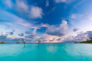 Inspirational tropics